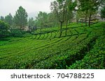 tea garden at the peak  bogor ... | Shutterstock . vector #704788225