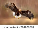 eagle flying above the lake... | Shutterstock . vector #704863339