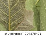 green leaf background close up... | Shutterstock . vector #704875471