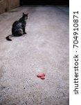 red fidget spinner and gray cat.   Shutterstock . vector #704910871