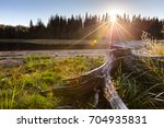 giant roots by a lake at sunset | Shutterstock . vector #704935831