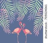 flamingo illustration | Shutterstock .eps vector #705024061