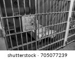 black and white gritty prison | Shutterstock . vector #705077239