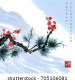 sakura blossom and pine tree... | Shutterstock .eps vector #705106081