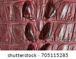 freshwater crocodile belly skin ... | Shutterstock . vector #705115285