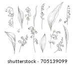 gorgeous drawing of lily of the ... | Shutterstock .eps vector #705139099