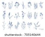 big bundle of elegant wild... | Shutterstock .eps vector #705140644