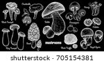 mushrooms set. bolete  morel ... | Shutterstock .eps vector #705154381
