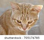 cat portrait close up  only... | Shutterstock . vector #705176785