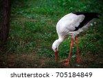 young stork. | Shutterstock . vector #705184849