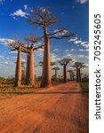 beautiful baobab trees at... | Shutterstock . vector #705245605