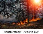 fire. wildfire  burning pine... | Shutterstock . vector #705345169