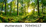 sunset in the forest   Shutterstock . vector #705454117