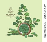 background with moringa  plant  ...   Shutterstock .eps vector #705461659