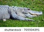 Small photo of An alligator is a crocodilian in the genus Alligator of the family Alligatoridae.