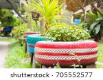 the organic plants were growth... | Shutterstock . vector #705552577