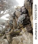 A Vertical Image Of A Rocky...