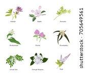 honey planty set for produsing... | Shutterstock . vector #705649561