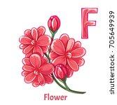 vector alphabet letter f. flower   Shutterstock .eps vector #705649939