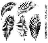 palm leaf silhouette. vector... | Shutterstock .eps vector #705652309