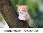 Stock photo adorable red kitten posing on a tree 705654055
