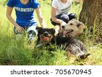 Small photo of Female volunteers sitting on grass and petting homeless dogs from shelter