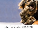 Stock photo puppy and kitten 7056760