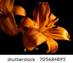Orange Day Lily Flowers On...