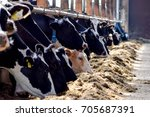 close up cows eat in cowshed | Shutterstock . vector #705687391