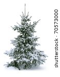 fir tree covered with snow | Shutterstock . vector #70573000