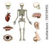 human biology  anatomy... | Shutterstock .eps vector #705739951