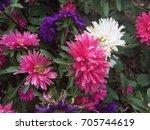 nature | Shutterstock . vector #705744619