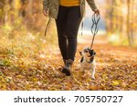 Stock photo woman goes with a dog walking in the autumn jack russell terrier 705750727