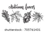 ink hand drawn set of maple and ... | Shutterstock .eps vector #705761431