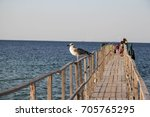 White Gull Meets Sunset On The...