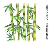 bamboo plant isolated on white...   Shutterstock . vector #705770881