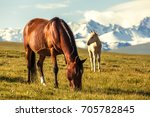 horses under snow mountains | Shutterstock . vector #705782845