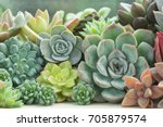 Various Type Of Succulent...