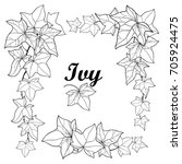 Vector Set With Outline Ivy Or...