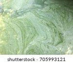 Small photo of Algae background