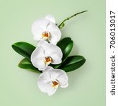 white orchid flowers and leaves ... | Shutterstock . vector #706013017