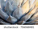 detail close up of blue green... | Shutterstock . vector #706068481