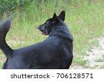 black dog outdoors | Shutterstock . vector #706128571