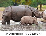 Mother And Calf Rhino Walking...