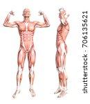 conceptual anatomy healthy... | Shutterstock . vector #706135621