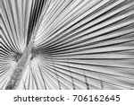 abstract stripes from nature ... | Shutterstock . vector #706162645