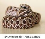 Snake  Pensive  Sad  Frightene...