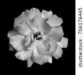 black and white rose on a black ... | Shutterstock . vector #706176445