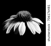 black and white cone flower on... | Shutterstock . vector #706176481