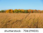 Prairie Grass With Trees...
